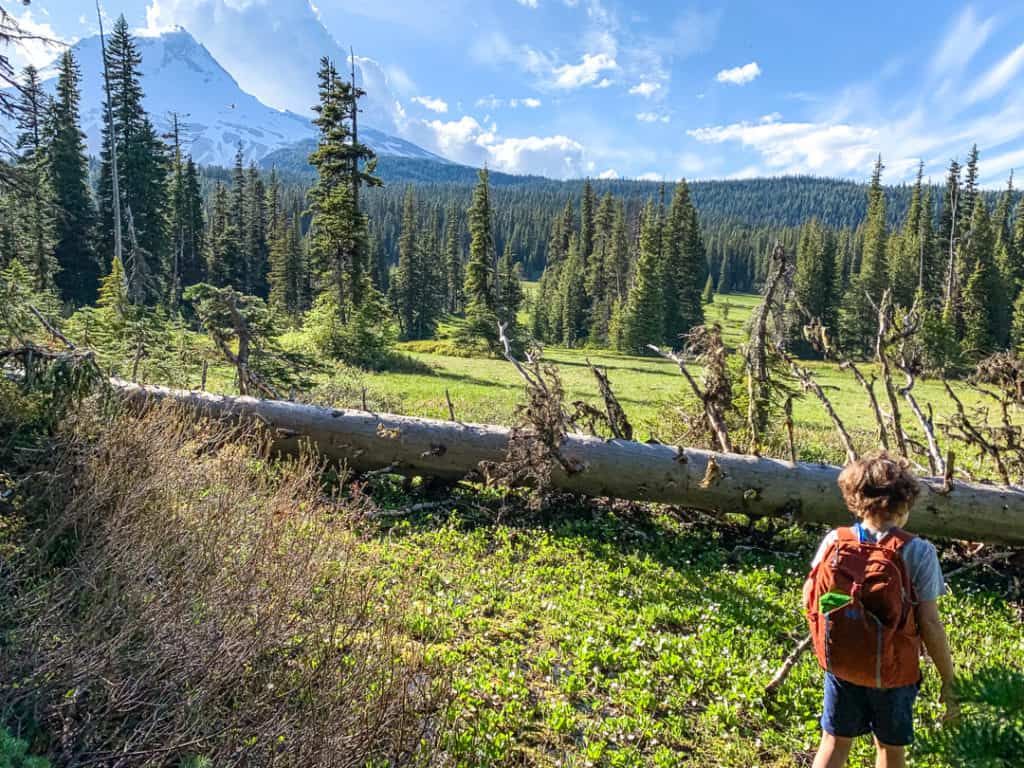 boy carrying orange backpack filled with hiking must-haves while hiking near mt hood
