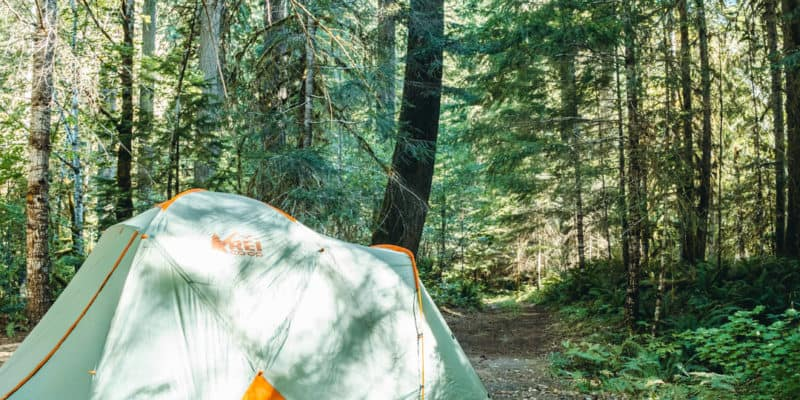 rei tent at dispersed campsite under the trees in the forest